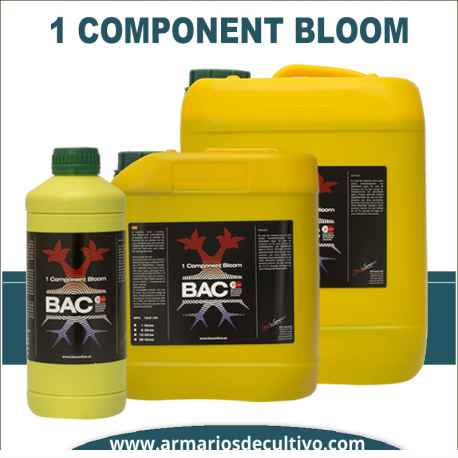 1 Component Bloom