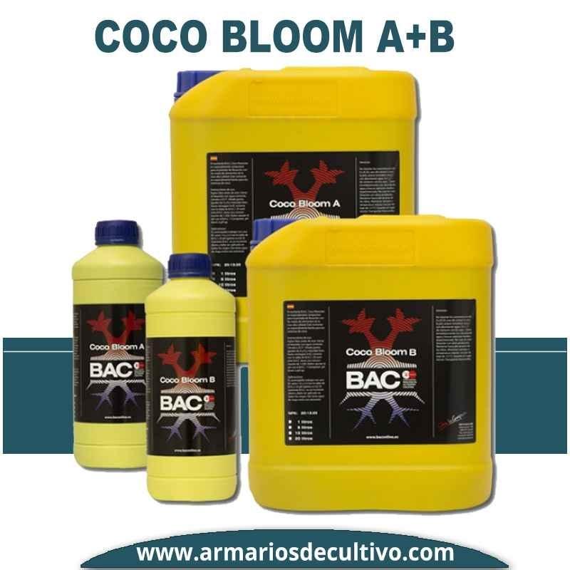 Coco Bloom A+B