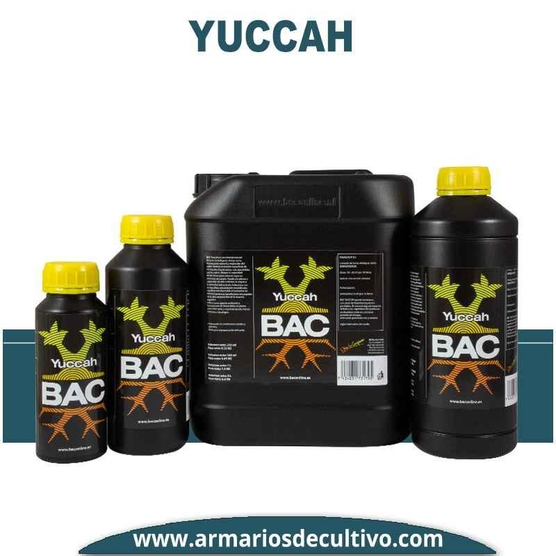 Yuccah