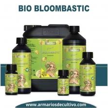 Bi-Bloombastic