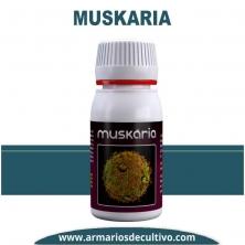 Muskaria