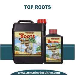 Top Roots