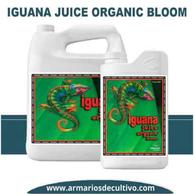 Organic Iguana Juice Bloom