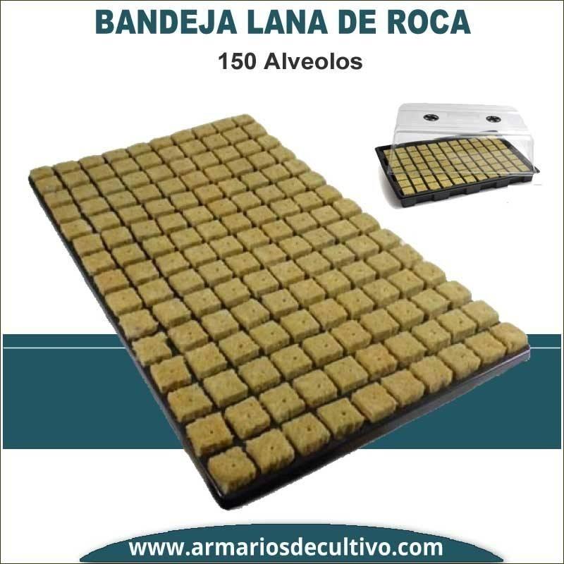 Bandeja lana de roca 150 alveolos